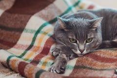 Gnuśny kot relaksuje na miękkiej koc Zwierzęta domowe, styl życia, wygodna jesień lub zima weekend, zimnej pogody pojęcie zdjęcia royalty free