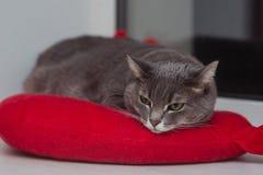 Gnuśny kot relaksuje na miękkiej koc Zwierzęta domowe, styl życia, wygodna jesień lub zima weekend, zimnej pogody pojęcie obrazy stock