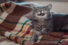 Gnuśny kot relaksuje na miękkiej koc Zwierzęta domowe, styl życia, wygodna jesień lub zima weekend, zimnej pogody pojęcie zdjęcie stock