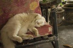 Gnuśny kot squirming na krześle Fotografia Royalty Free