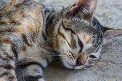 Gnuśny kota sen na podłoga obraz royalty free