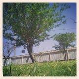 Gnuśny lato dzień Zdjęcia Stock