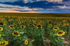 Gnuśny lato wieczór W Kolorado zdjęcie stock