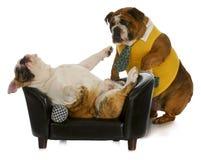 Gnuśny pies obrazy royalty free