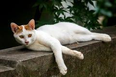 Gnuśny przybłąkany kot Fotografia Royalty Free