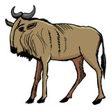 Gnu, african animal. Gnu, illustration of african animal Stock Photo