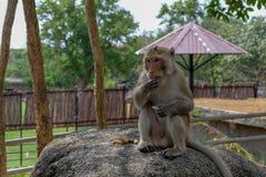 Gnu alto vicino nello zoo aperto fotografie stock libere da diritti