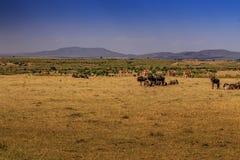 Gnu e anteloppes in masai Mara Fotografie Stock Libere da Diritti