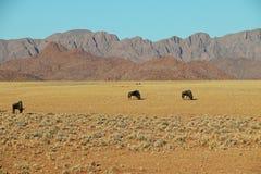 Gnu e gazella o gemsbok dell'orice nel deserto del de Namib vicino al solitario in Namibia Fotografia Stock