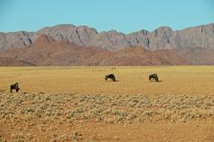 Gnu e gazella ou gemsbok do Oryx no deserto do de Namib perto do solitário em Namíbia Fotografia de Stock