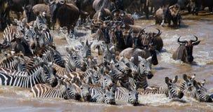 Gnu korsar den Mara floden stor flyttning kenya tanzania Masai Mara National Park royaltyfri foto
