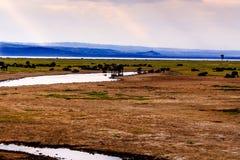 Gnu in masai Mara Fotografia Stock Libera da Diritti