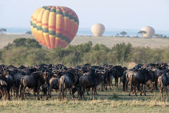 Gnu migration Royalty Free Stock Photography