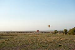 Gnu migration Stock Photos