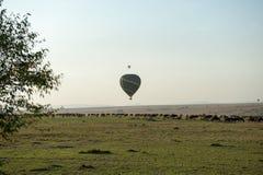Gnu migration Royalty Free Stock Photo