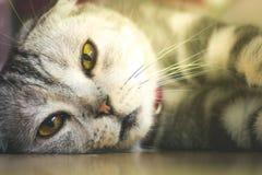 Gnuśny kota dosypianie Zdjęcia Royalty Free