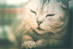 Gnuśny kota dosypianie Obraz Stock