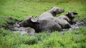 Free Gnu Resting In Water Because Of Hot Weather Royalty Free Stock Image - 46625536