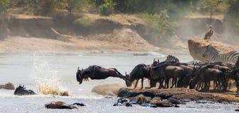 Gnubanhoppning in i Mara River stor flyttning kenya tanzania Masai Mara National Park royaltyfri bild