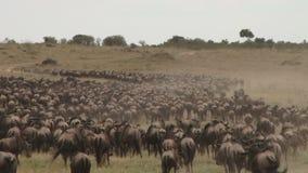 Gnumigration von serengeti zu Masai Mara stock footage