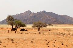 Gnus unter dem Kameldornenbaum in Sossusvlei - Namibia Afrika lizenzfreie stockfotografie