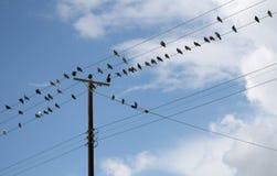 Gołębie na elektrycznych drutach zdjęcie royalty free