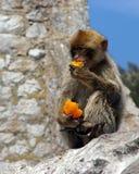 Goût d'oranges bon Photo libre de droits