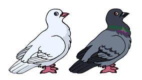 Gołąb ilustracja wektor