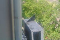 Gołąb na budynku Zdjęcia Stock