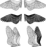 gołąbek skrzydła Obraz Royalty Free