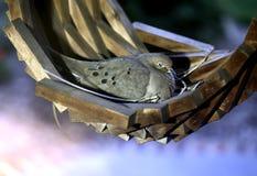 gołąbka Zdjęcie Royalty Free