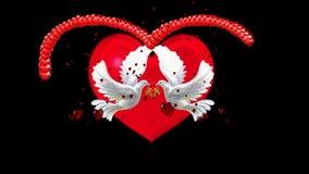 GOŁĄBKA I miłość zdjęcie wideo