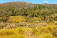 Gołąbka jaru ślad - Kołysankowa góra Obrazy Royalty Free