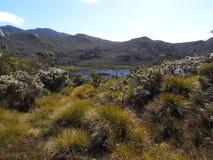 Gołąbka jezioro, Tasmania Zdjęcia Royalty Free