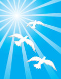 gołąbki błękitny niebo trzy royalty ilustracja