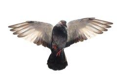 gołąbki Easter latająca ilustracja Zdjęcie Royalty Free