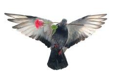 gołąbki Easter latająca ilustracja Obrazy Stock