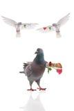 gołąbki Easter latająca ilustracja Zdjęcie Stock