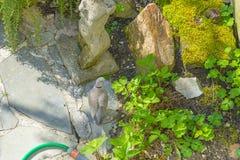 Gołąbki gmeranie dla materiałów budowlanych w ogródzie w wiośnie Obraz Royalty Free