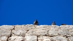 Gołąbki siedzi na miasto ścianie Dubrovnik fotografia stock