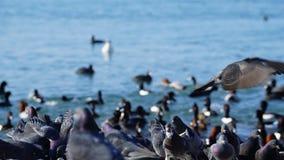 Gołąbki w plaży Fotografia Stock