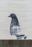 Gołębi graffiti Zdjęcia Royalty Free
