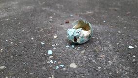 Gołębi jajko spadek na podłoga Zdjęcia Stock