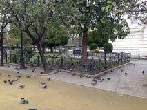 Gołębi jeść obraz stock