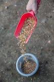 Gołębi jedzenie 3 Obraz Royalty Free