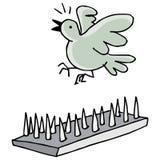 Gołębi kolce Zdjęcia Royalty Free