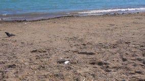 Gołębi odprowadzenie na brudnej plaży zbiory