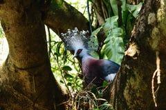 Gołębi ptak Fotografia Royalty Free