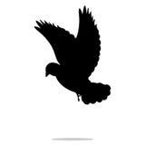 Gołębi ptasi czarny sylwetki zwierzę Zdjęcia Royalty Free