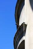 gołębia dach Zdjęcie Stock